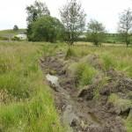 Modifications hydriques des prairies humides - Hydrologische Veränderungen des Feuchtgrünlandes 3