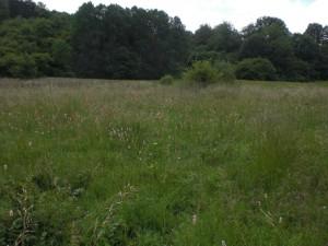 Site Grumelange près de Martelange