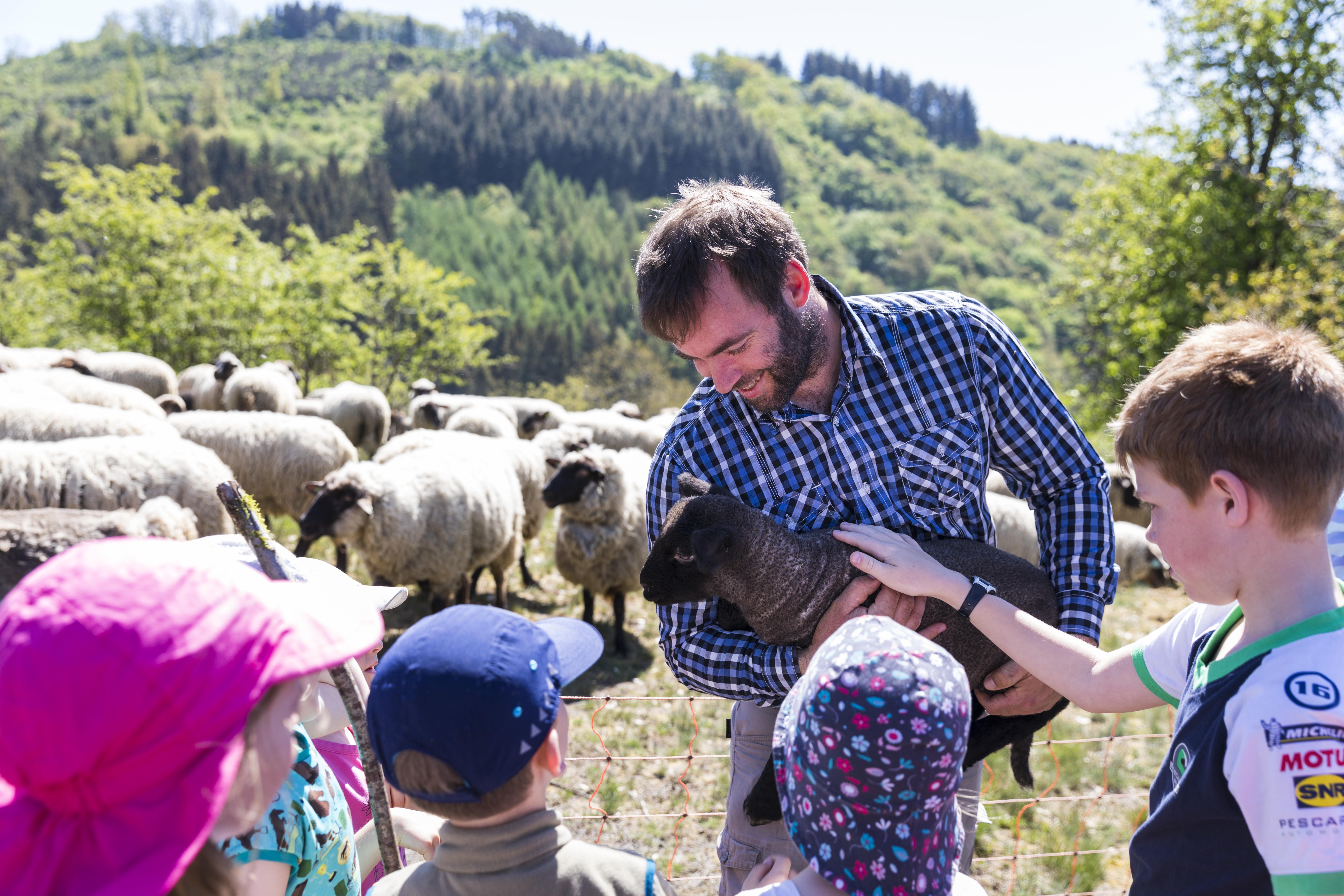 Familien-Schafwanderung im Kiischpelt