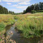 Bestimmungskurs Schmetterlinge